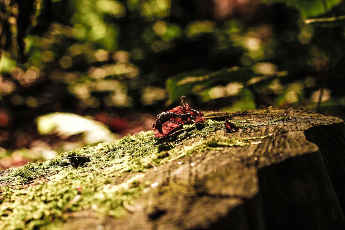 Waldshooting - Bild 01