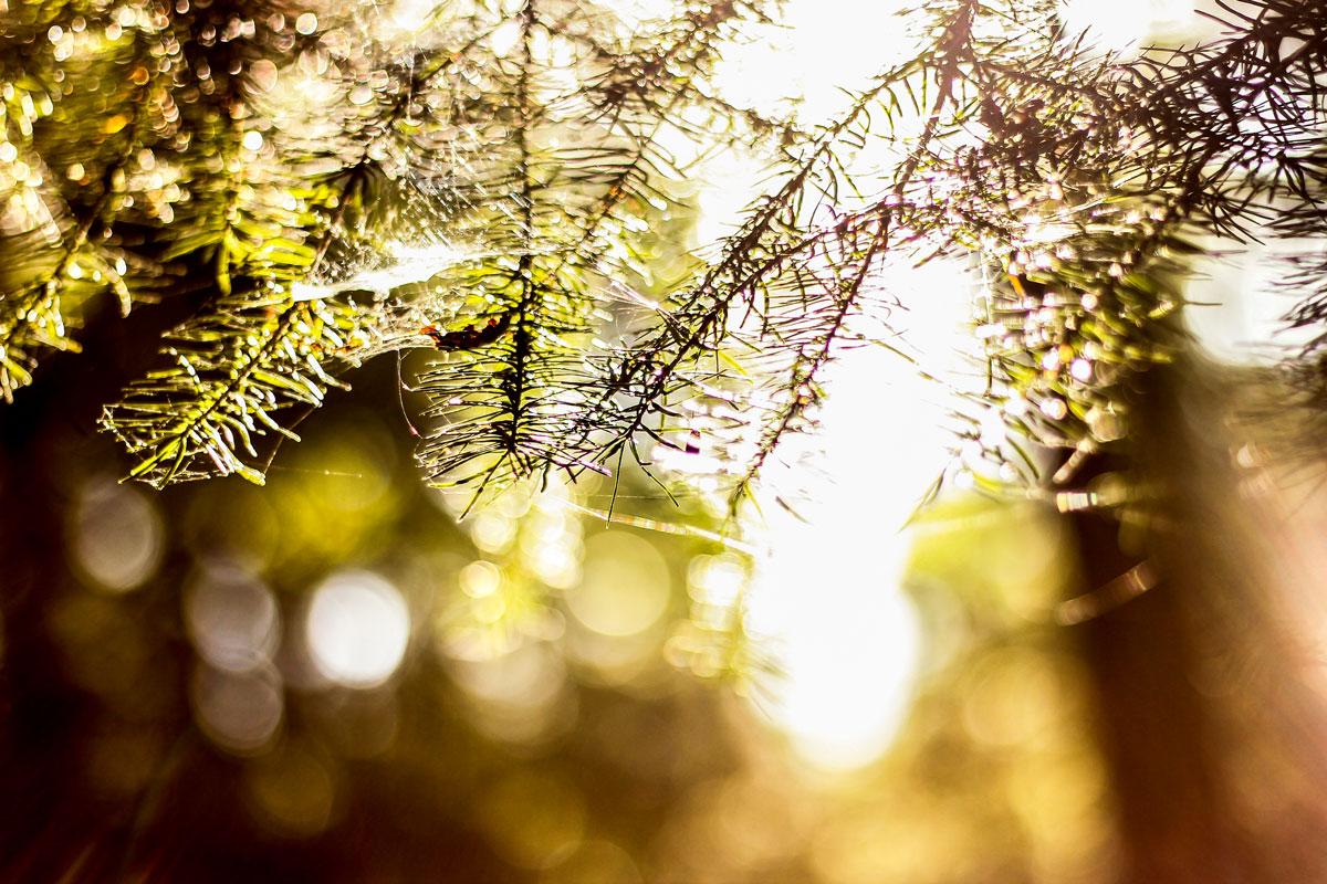 Waldshooting - Bild 02