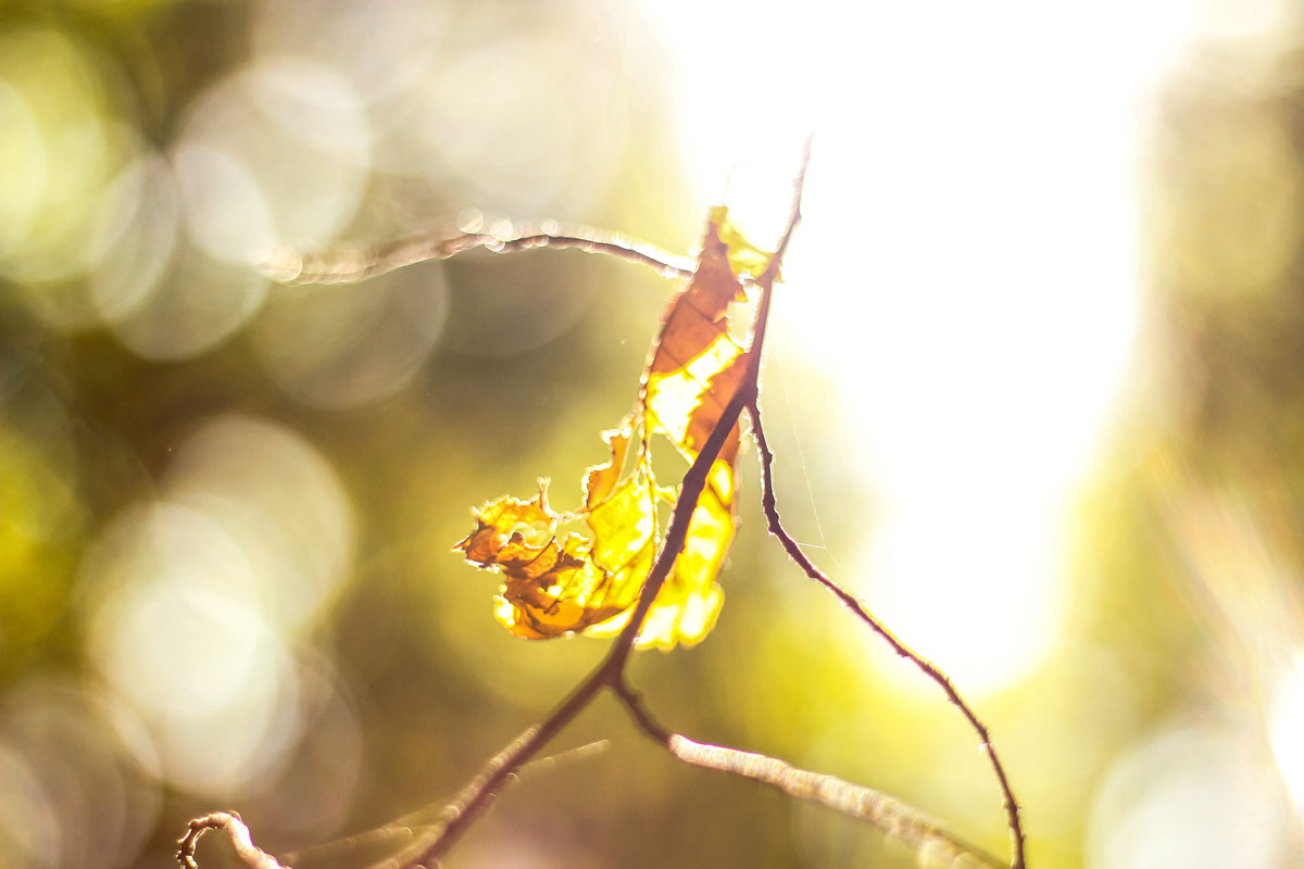 Waldshooting - Bild 03