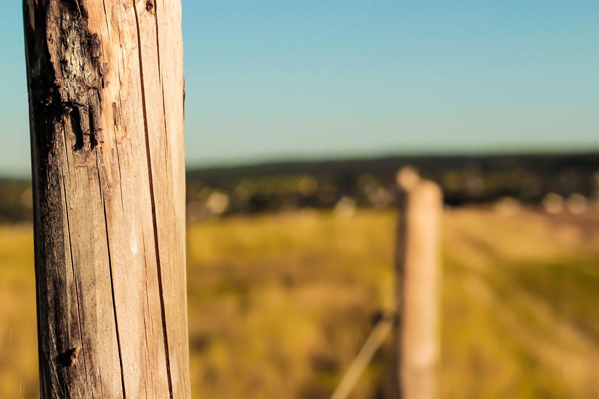 Waldshooting - Bild 05