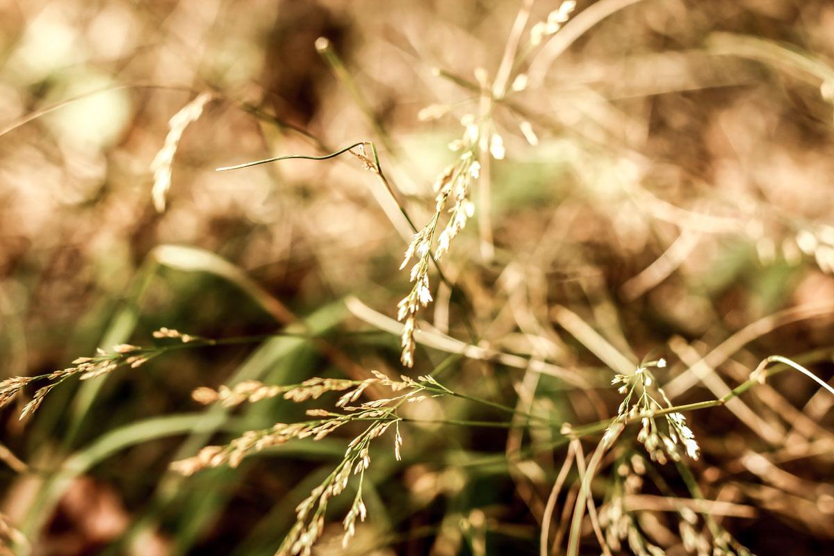 Waldshooting - Bild 04